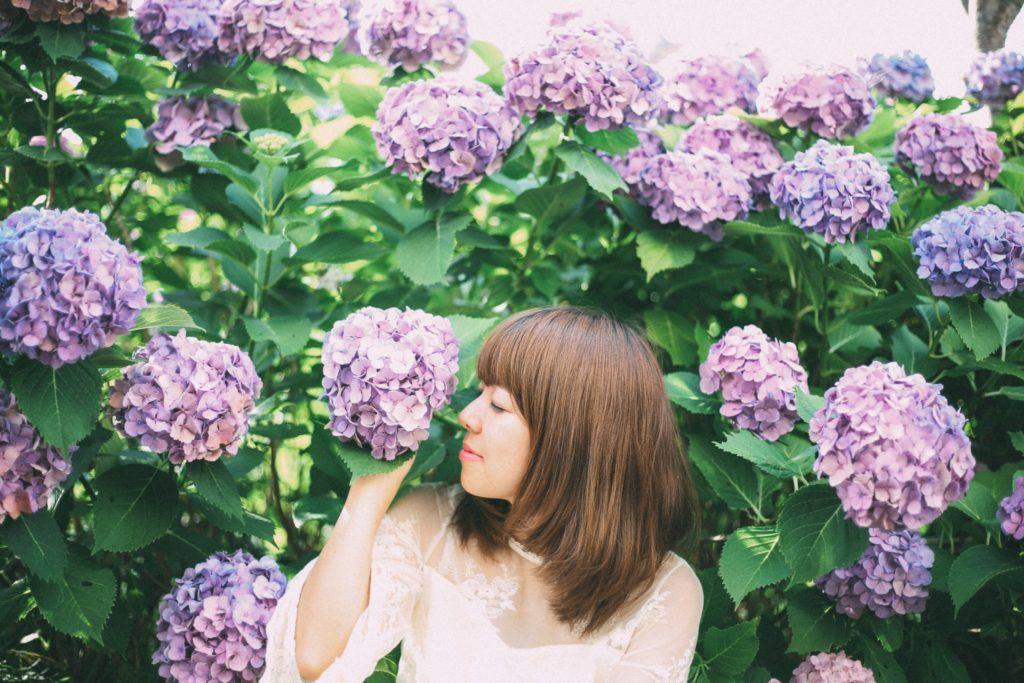 紫陽花の季節がやってきます!